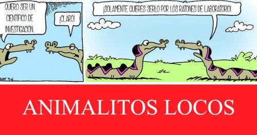 Animalitos locos